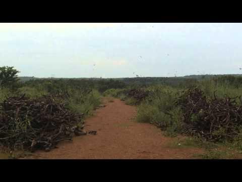 Swiftlet Sound Test : Ecloud By Wikiwalet video