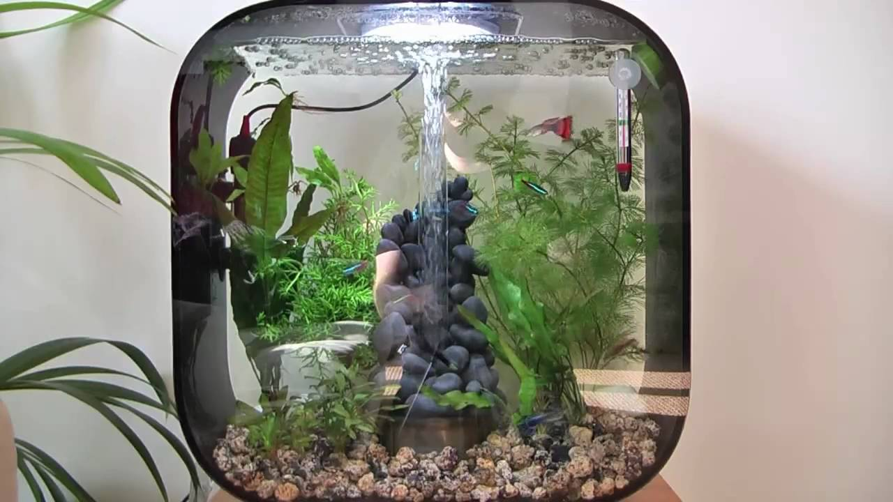 Biorb life 30 black and a new tank mate youtube for Decoration aquarium 60 litres