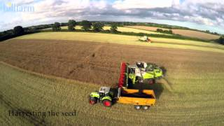 The Lifecycle of Rapeseed - HillFarm Oils