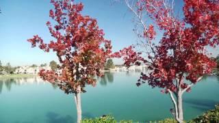 Irvine, California Community Tour in HD