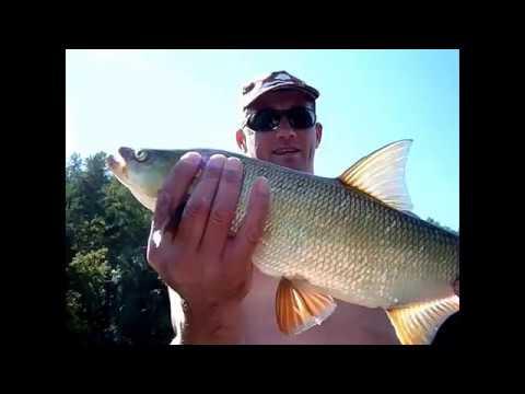 клев рыбы на перекатах