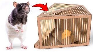 🧀🐀 DIY Simple Rat Trap from Cardboard