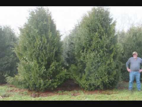 Stop Global Warming with trees  Plant Now