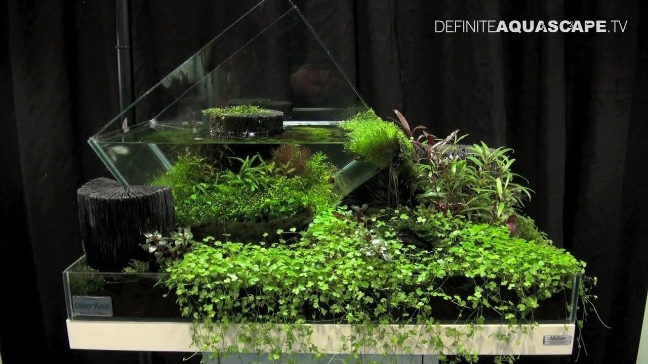 Aquascaping - The Art of the Planted Aquarium 2013 Nano pt.3 - YouTube
