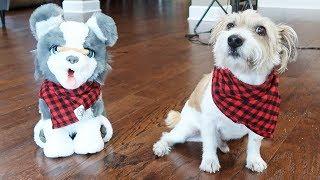 Toy Dog vs Real Dog Bone Flip Challenge