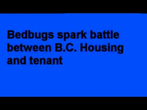 Calgary Alberta Canada WHAT WORKS BEST FOR BEDBUGS ? COMPARE BED BUG INSECTICIDES & RESULTS Bedbug