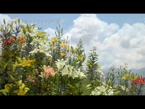 Goovie写眞館 Summer Flower