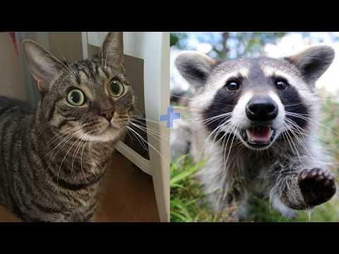 СКРЕЩИВАНИЕ КОШЕК РАЗНЫХ ПОРОД 🐱🎈 Самые удивительные гибриды кошек #2 (Видео для детей и взрослых)