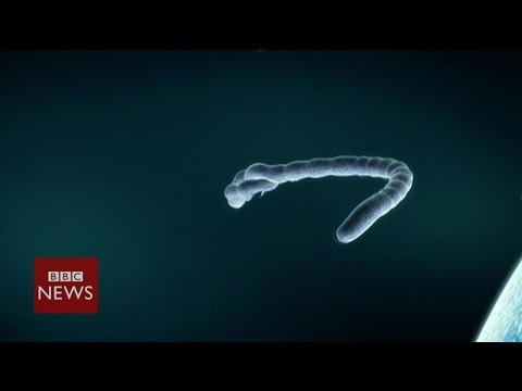 Ebola virus: What is it? We explain in 60 seconds - BBC News