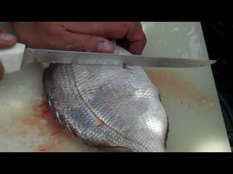 How to Fillet a God Dam Porgy