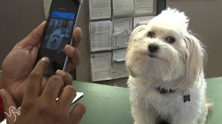 Dog Reunited With Owner (Thanks To Science)