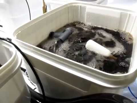 Under Current Recirculating Deep Water Culture Hydroponic System