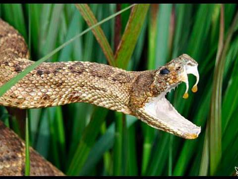 Snake Bytes TV - 5 Meanest Snakes In The World!