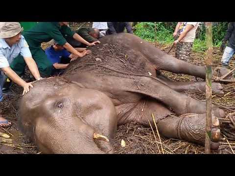 download lagu Gajah Sekarat Di Kebun Binatang Bandung gratis