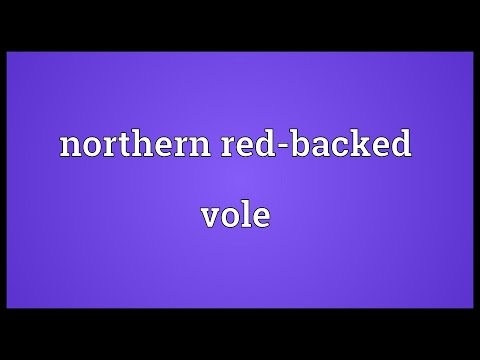 Header of Northern Red-Backed Vole