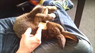 Moo Moovie - the unusual and joyous life of Moo the travelling rabbit