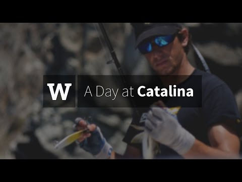 Western Waters - A Day At Catalina Island