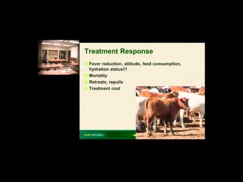 Which calf needs extra medicine:Updates in identification and treating