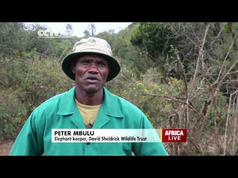 Eco Africa: Caring For Kenya's Orphaned Elephants