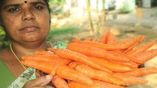 FRESH Carrot Recipe Cooking in My Village | Prepared by Mummy | VILLAGE FOOD
