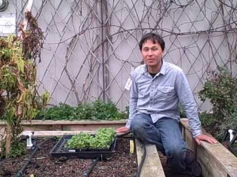 Garden Update Episode #377 Urban Gardening Tour