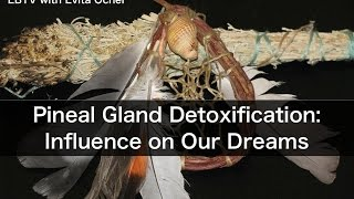 Pineal Gland Detoxification & Our Dream State