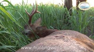 Roe Buck Hunting in Hungary Lesli Club (HD)