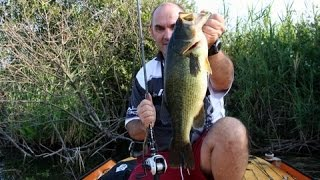 BASS Fishing sul Varese lake con il caldo estivo
