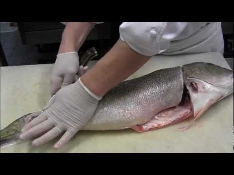 Preparing Line-Caught Fish, a Sustainable Seafood