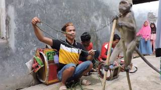 Indonesia Brebes Monkey Tour ,Topeng Monyet//The best Monkey street attraction