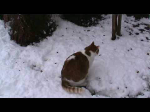 Texas Snow Cat