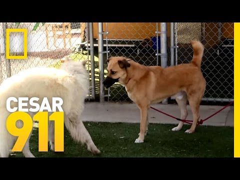 Just Breathe | Cesar 911