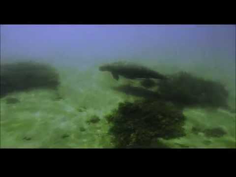 North Keppel Island Environmental Education Centre Dugong Encounter