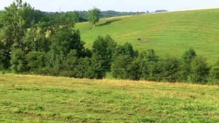 pension chevaux cavallon.mov