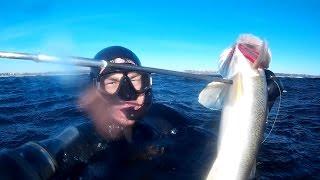 Подводная охота на язя