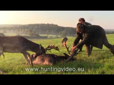 fallow-buck-rescue-in-hungary-hd.html