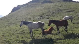 Atlar yaylaqda