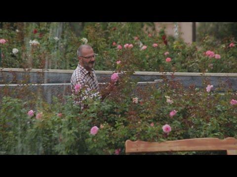 Le nom des roses - Monaco Life Bonus
