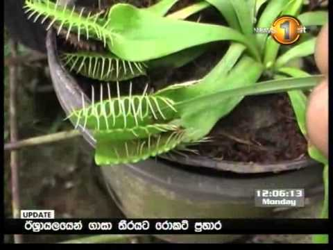 Sirasa lunch time news 29.04.2013 12 pm
