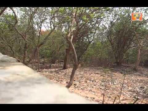 Mahim Nature Park Dharavi