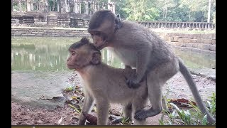 download lagu What Baby Monkey Doing? Why He Does Follow Leader gratis
