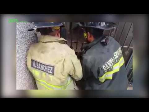 Rescatan a perro atrapado en reja