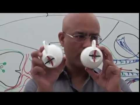 Trochlear Nerve and its Clinical Correlates - Neuroanatomy Part 2/2
