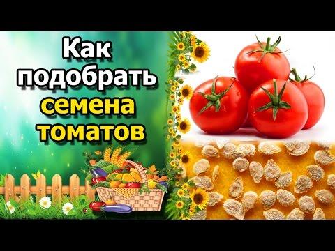 ????Как выбрать семена и сорта томатов(помидор). Основные правила при подборе сортов.