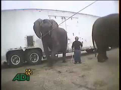 Bailey Bros. Elephant Abuse
