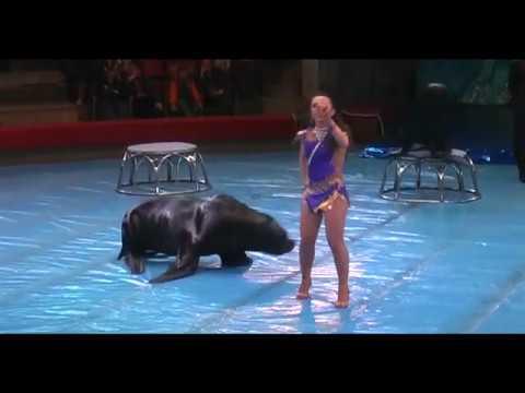 Цирк морские львы