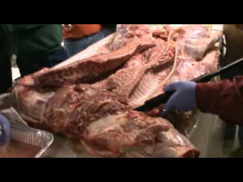 Carolina Pitmasters Goes Whole Hog