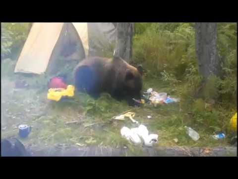 Медведь съел консервы