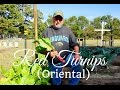 HD How To Grow Oriental RED TURNIPS By Direct Sowing mp3