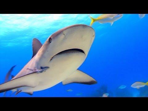 SHARKWATER Trailer Deutsch German & Kritik Review